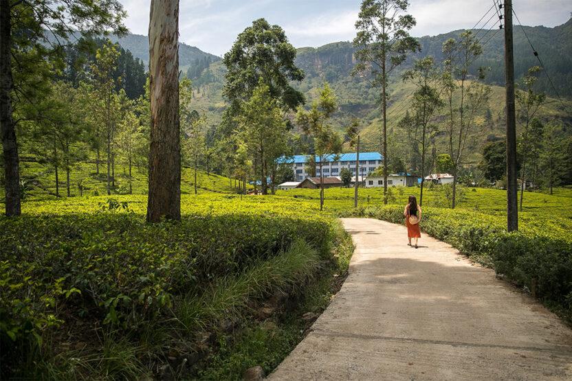 Tee trinken in der Blue Field Tea Factory