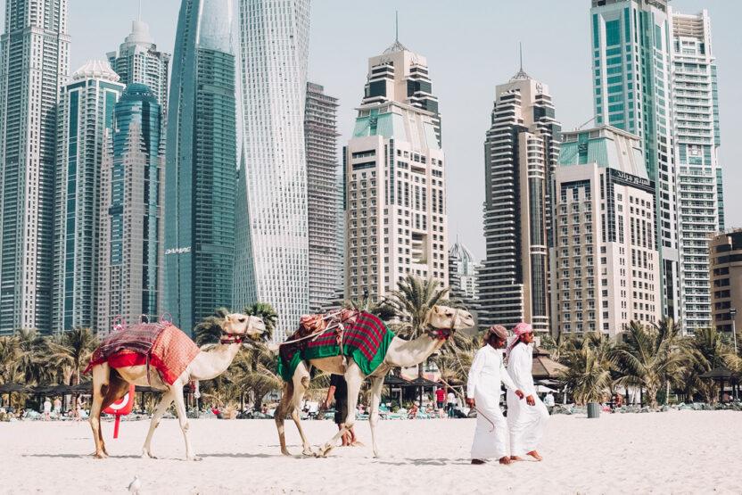 Kamele am Strand vor der Skyline von Dubai