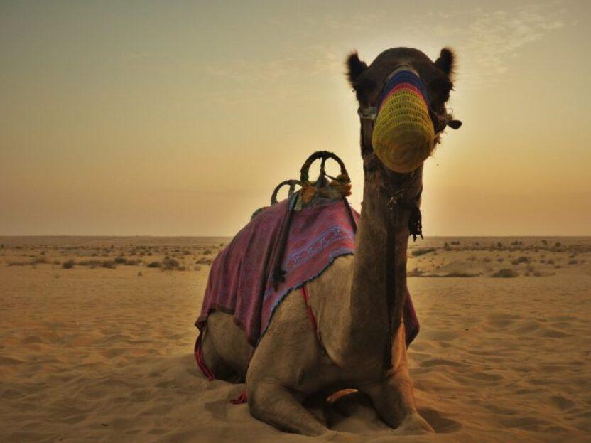 Dubai: Eine Wüstensafari ist ein echtes Abenteuer