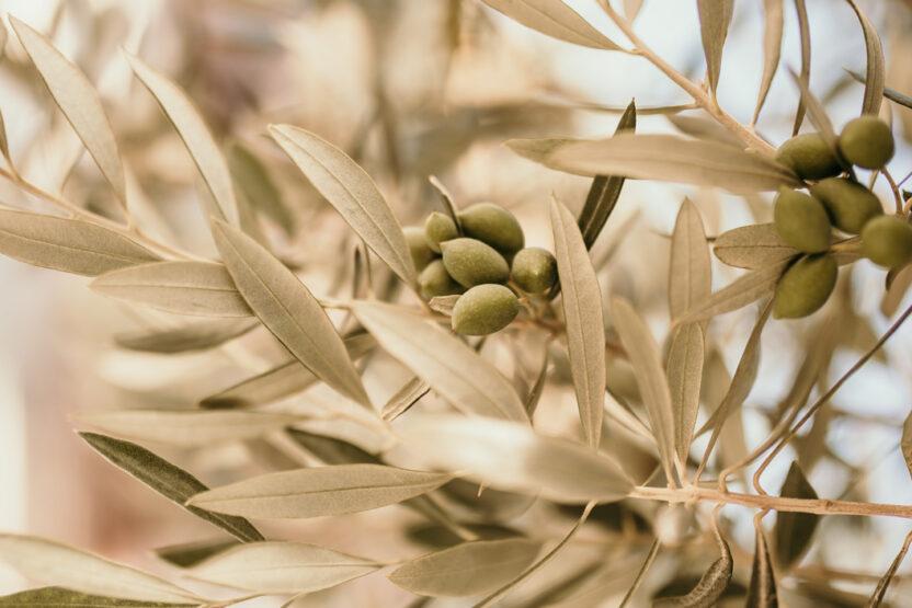 Auf Djerba gehören Oliven zur Spezialität