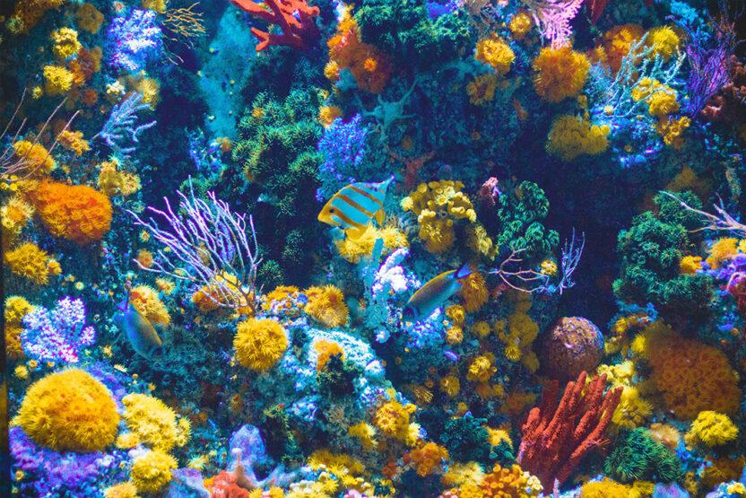 Récif corallien coloré