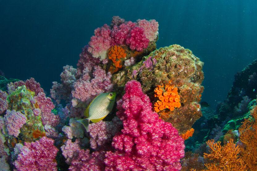 Le paradis du snorkeling en Égypte