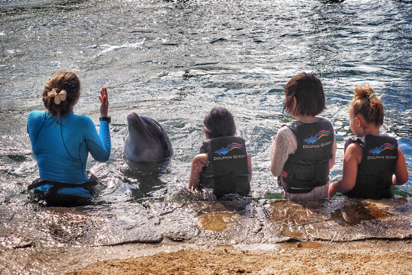 Schwimmen mit Delfinen auf den Azoren